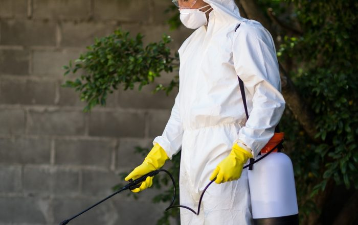 Pesticides sprayed in towns and cities