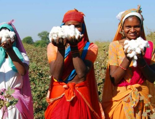 More Companies to be Assessed in Second Sustainable Cotton Ranking