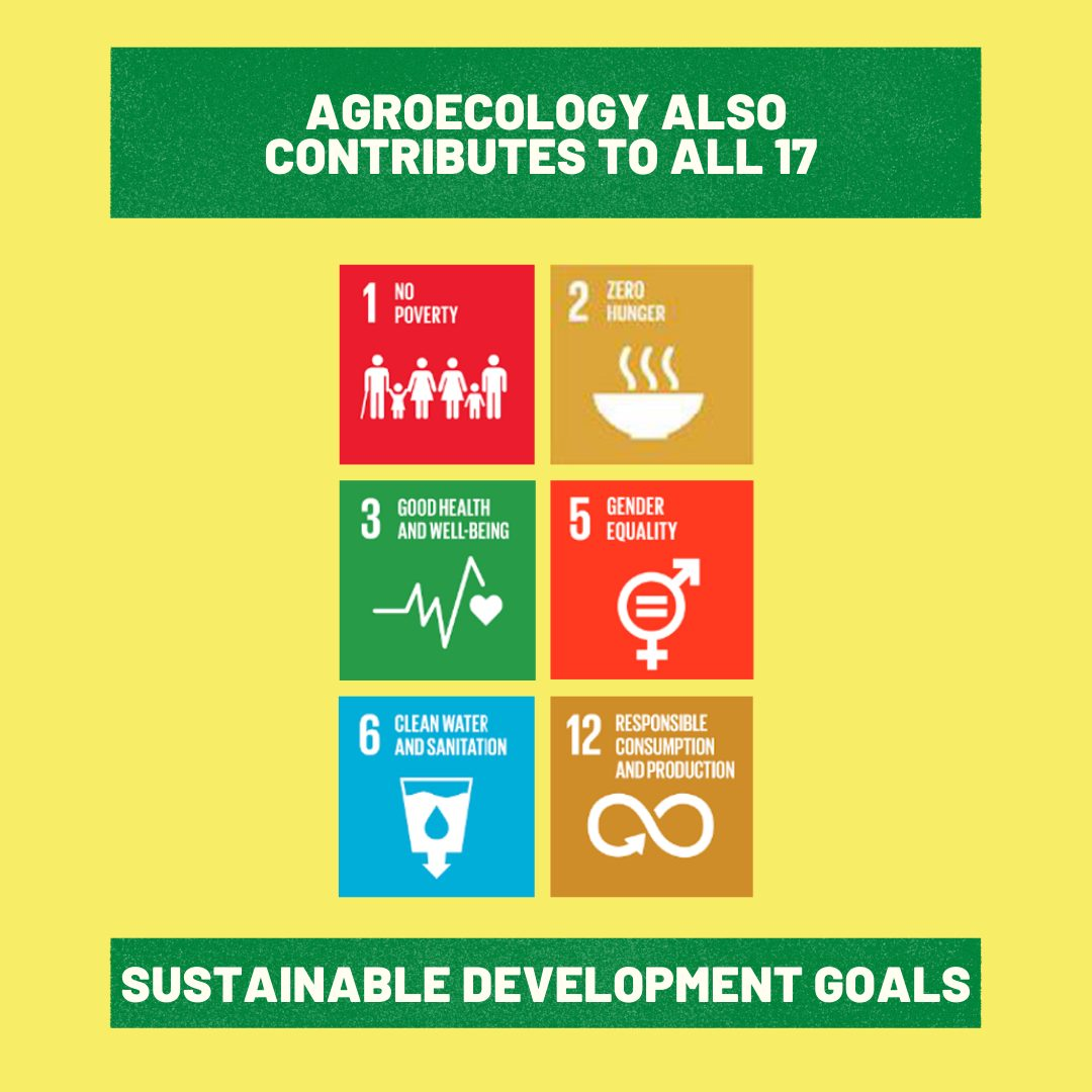Agroecology contributes to all the 17 Sustainable Development Goalsv