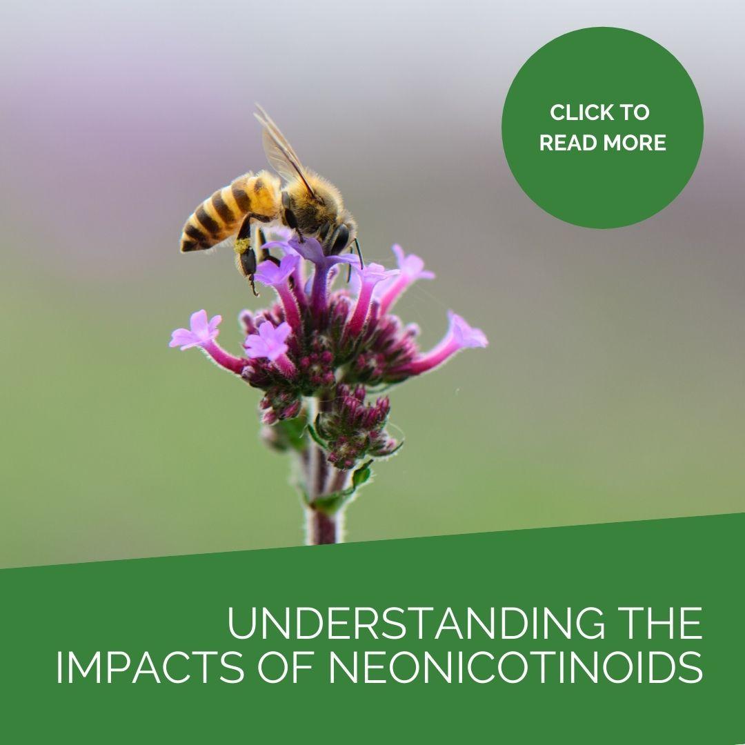 Understanding the impact of neonicotinoids