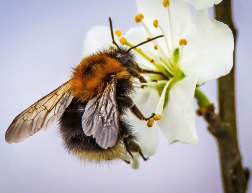 Organisations unite against neonicotinoids decision