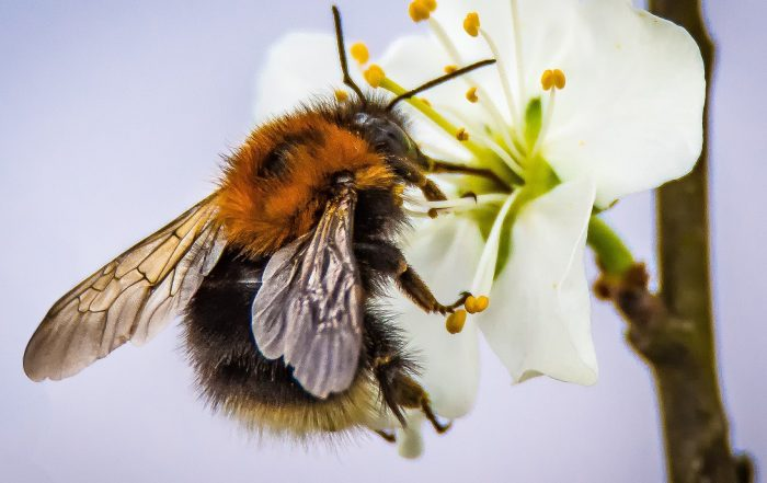 United against neonicotinoids decision