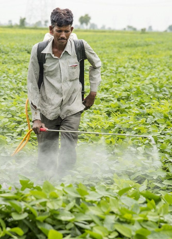 Wearing no PPE when spraying pesticides is common SAICM