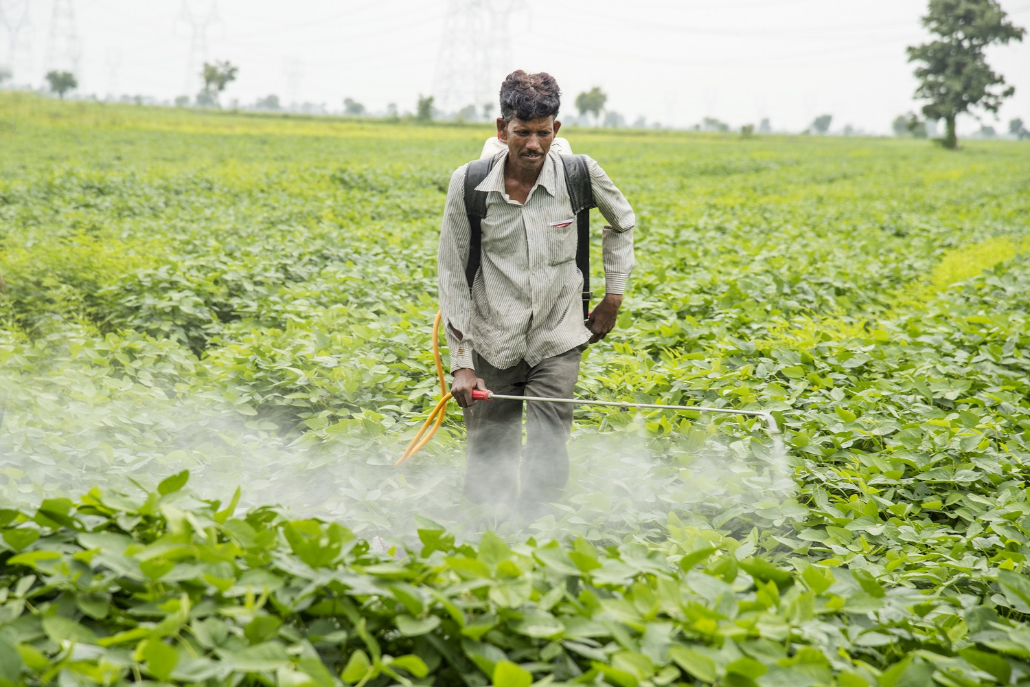 Wearing no PPE when spraying pesticides is common