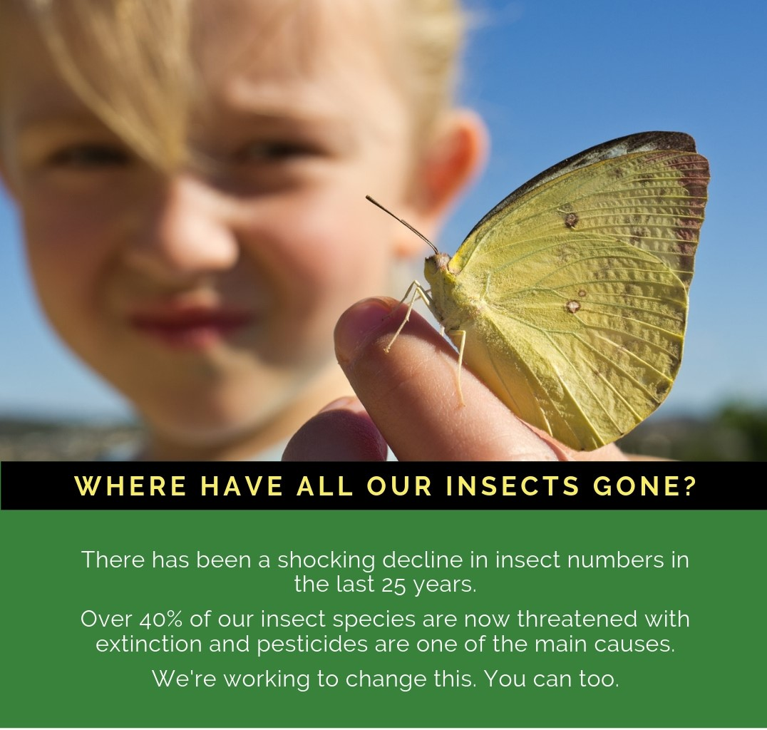 Where have all our insects gone - join the pesticide-free revolution