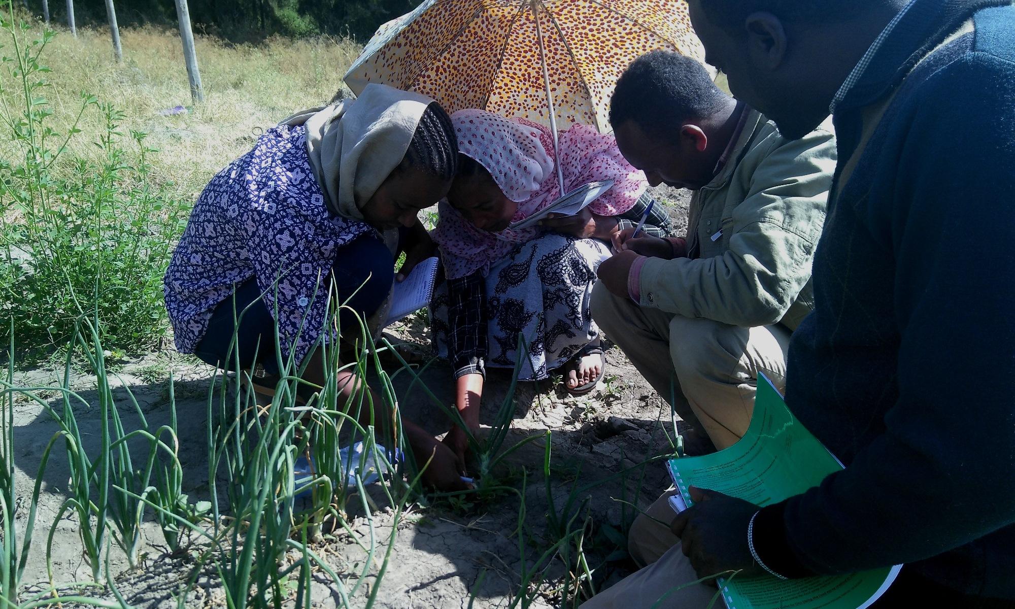 Growing vegetables sustainably in Ziway, Ethiopia