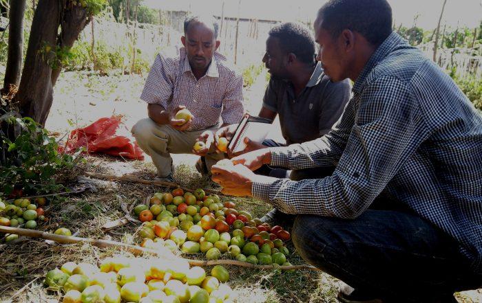 Sustainable vegetable growing in Ziway, Ethiopia
