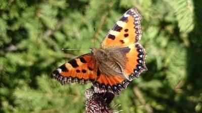 Pesticides impact on biodiversity